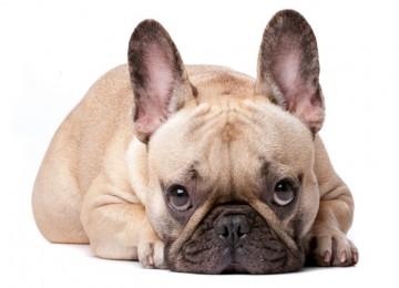 8 Segnali che il tuo cane ti sta mandando che non devi ignorare, perchè sta male.