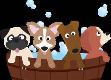 I 7 errori piu' comuni che fa chi lava il proprio cane a casa