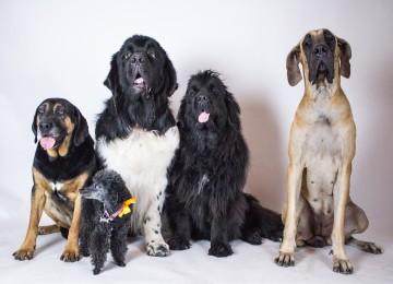 Il microbiota intestinale per la salute del cane