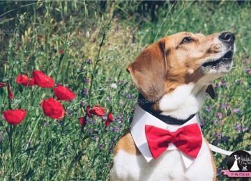 Accessori cani matrimonio