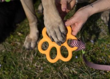 I giochi per cani che piacciono veramente ai cani non solo ai padroni