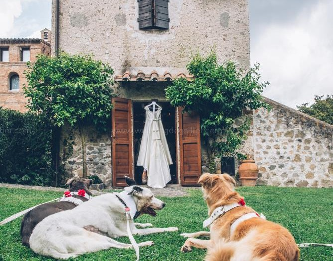 www.weddingdogsitter.com_cani e sposi